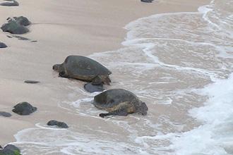 20140216_turtle